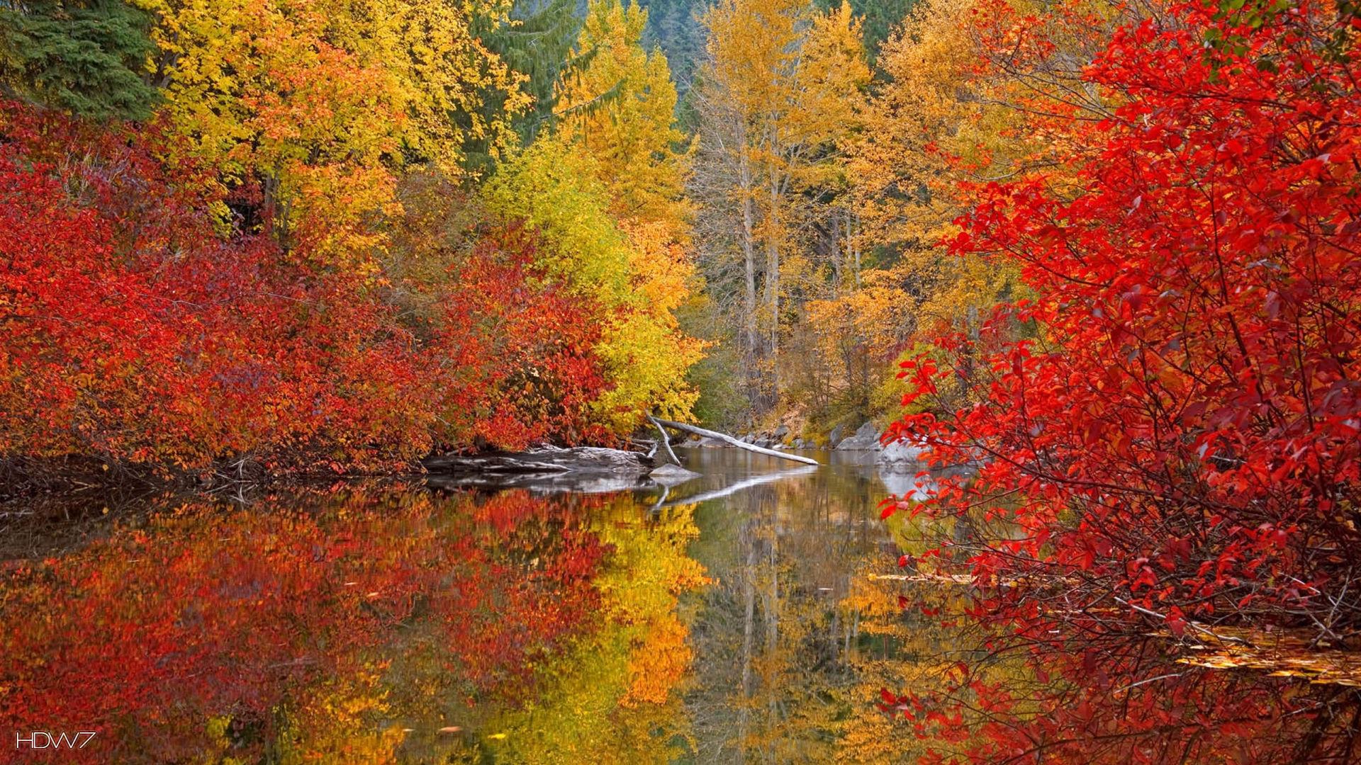 fall color wallpaper   HD wallpaper gallery #53