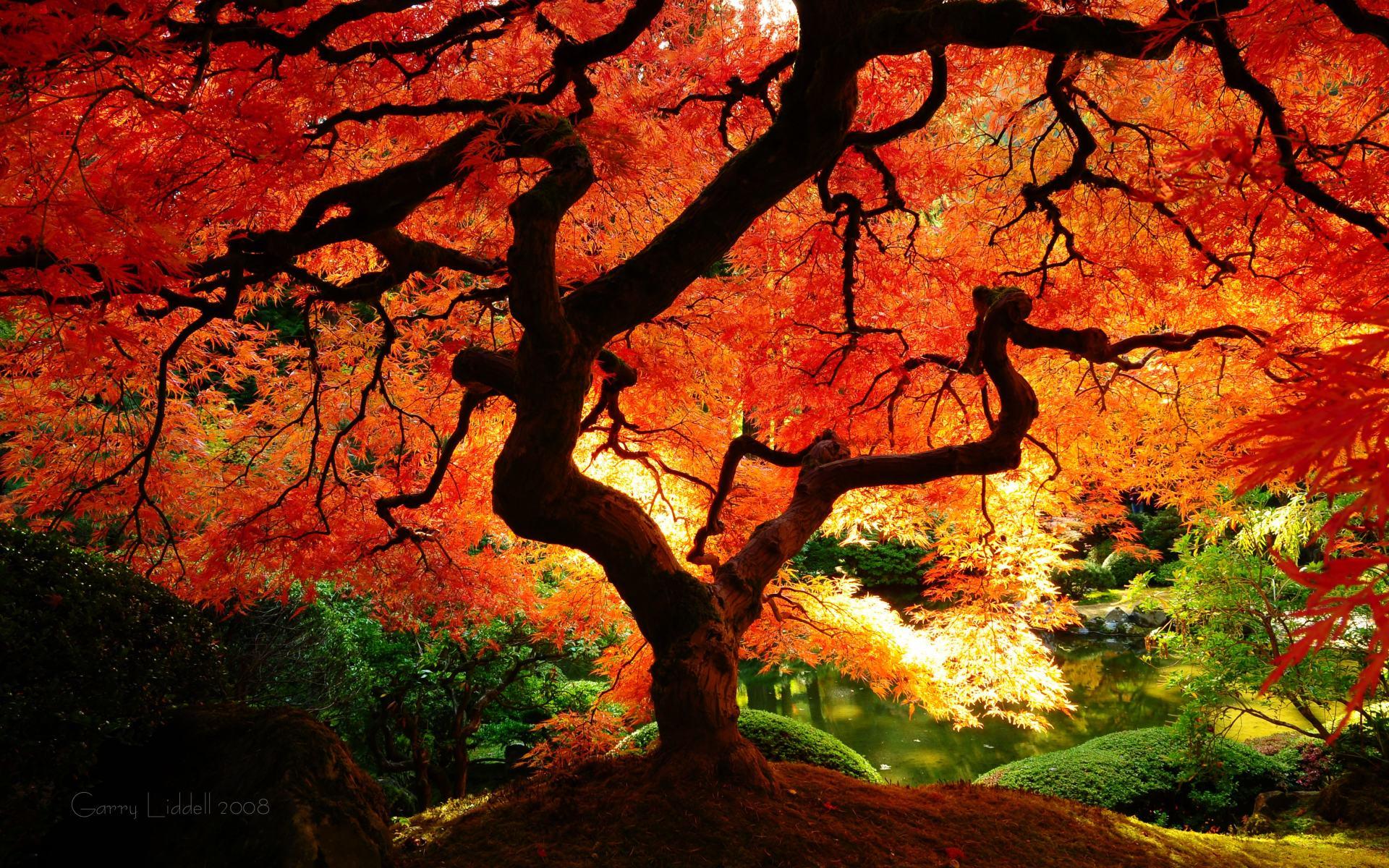 Fall Colors Desktop Wallpaper - WallpaperSafari