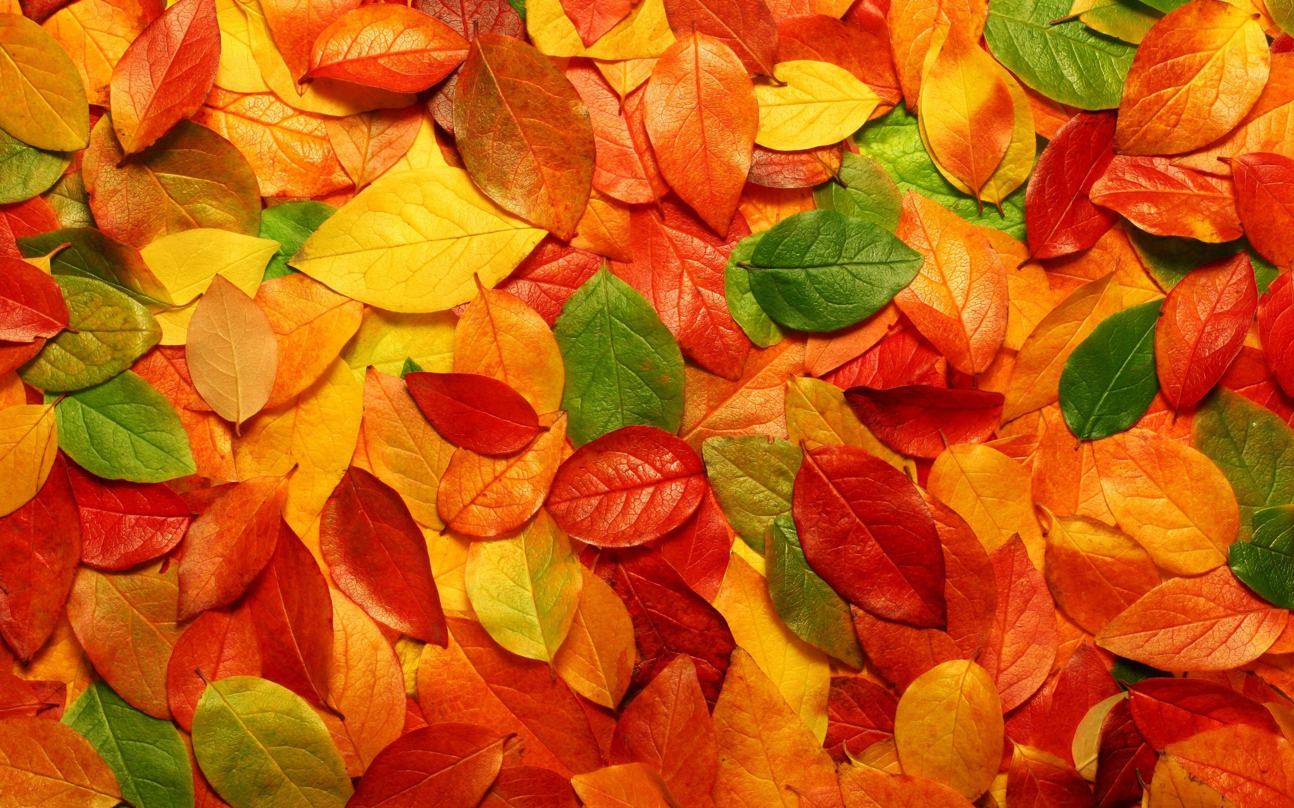 Fall Color Wallpaper