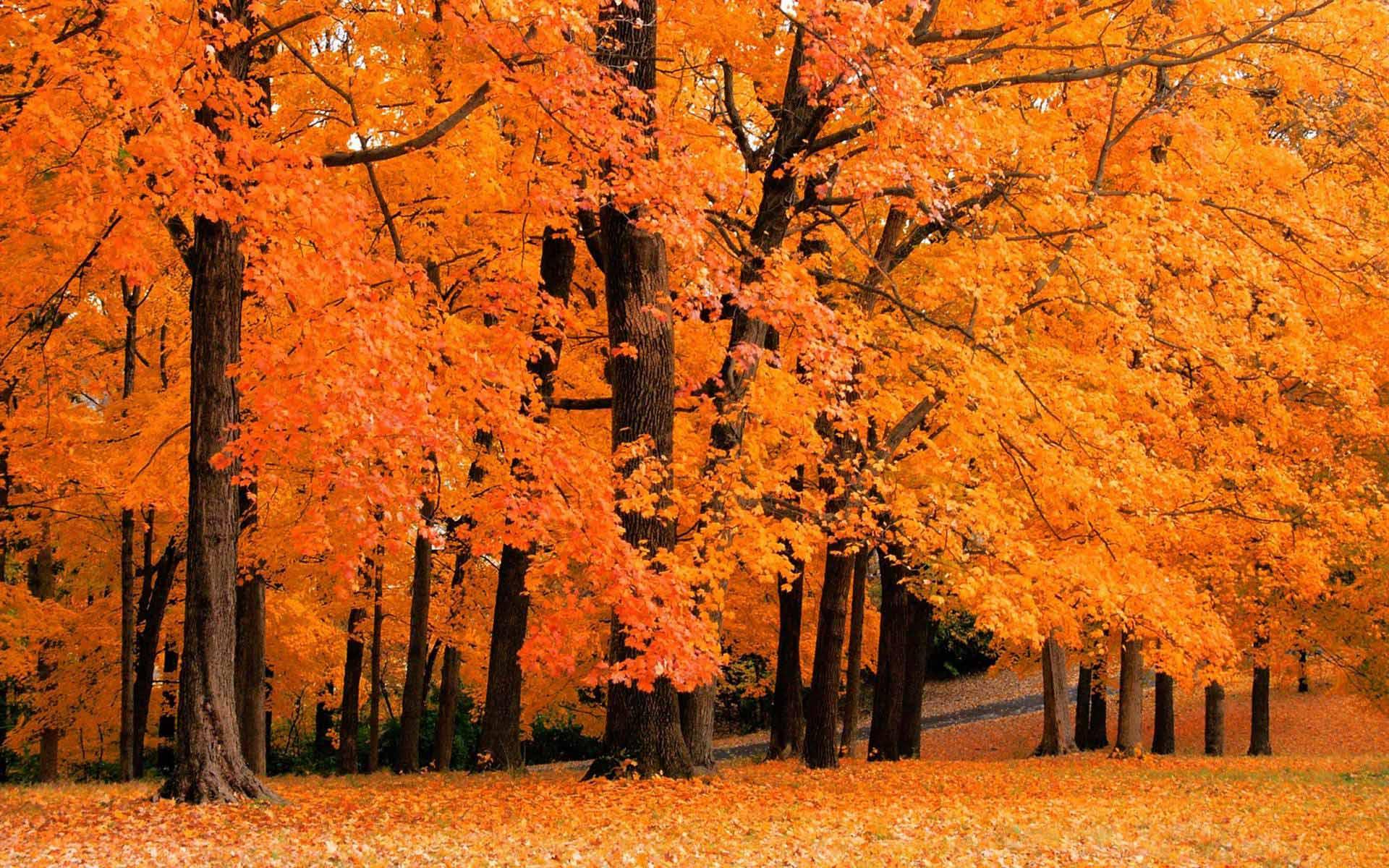 Fall Color Wallpaper