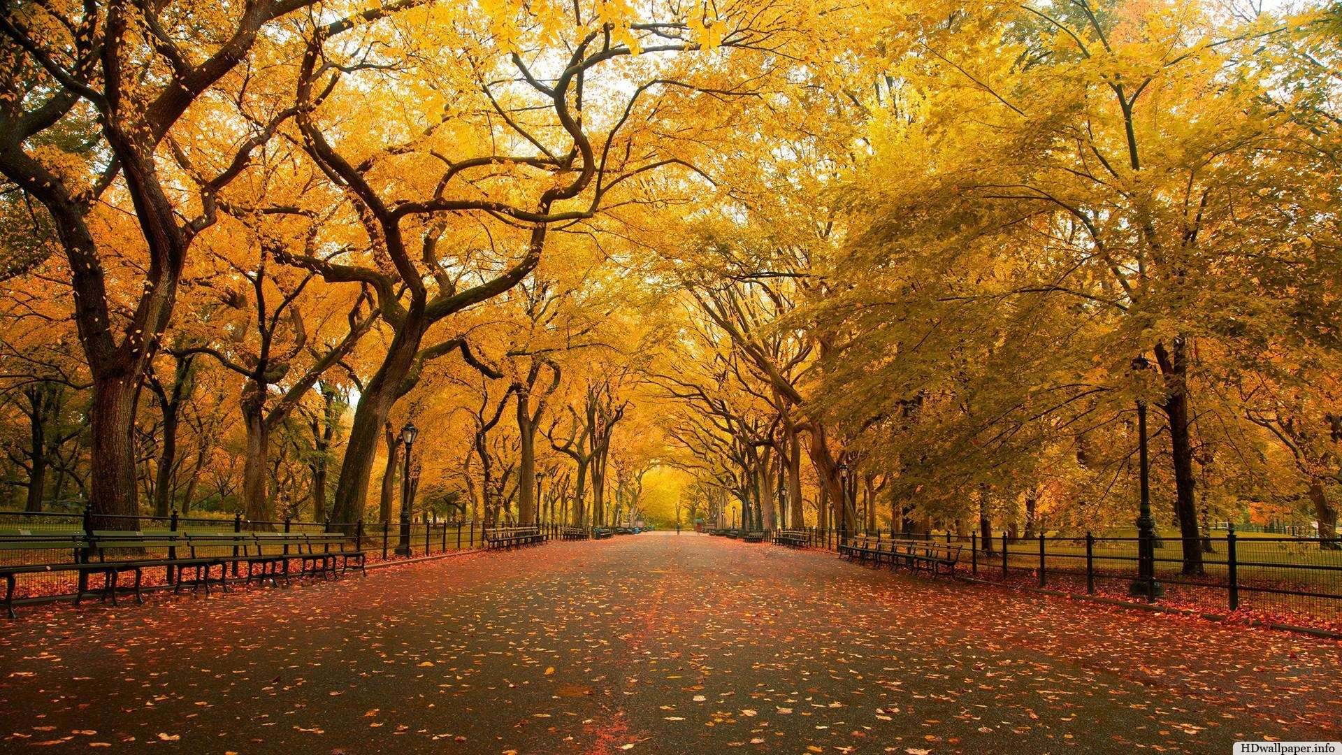 Fall Desktop Wallpaper Widescreen | HD Wallpapers