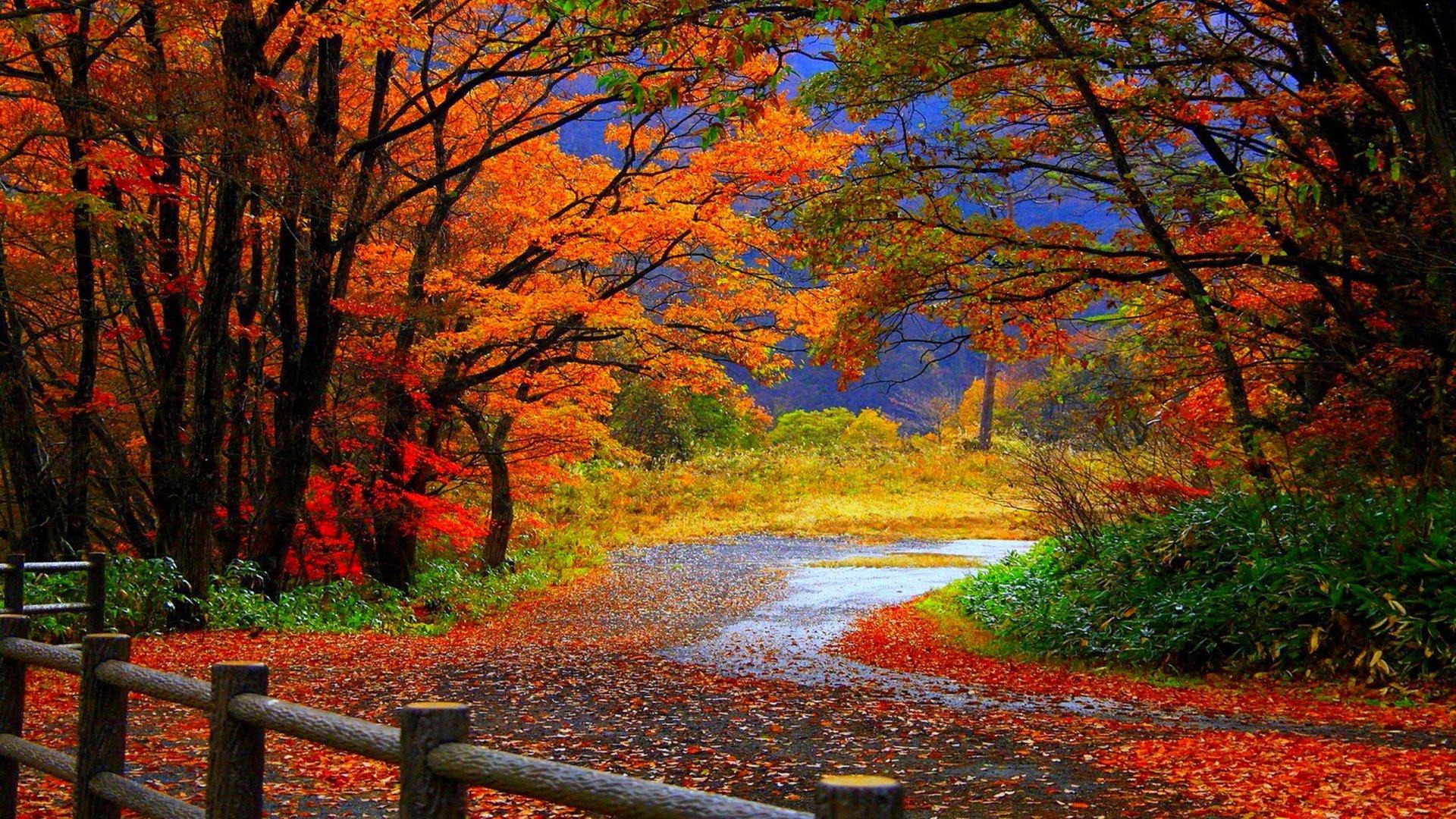 Fall Foliage Wallpapers HD | PixelsTalk Net