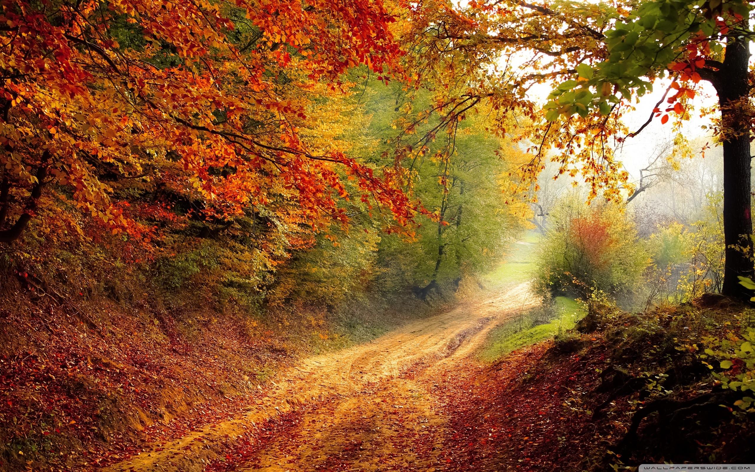 Fall Foliage HD Desktop Wallpaper : Widescreen : High Definition
