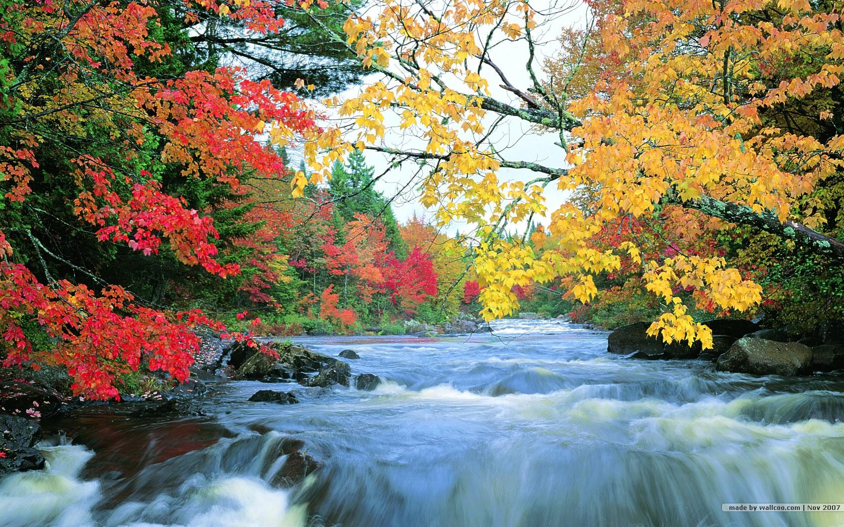Fall Foliage Desktop Wallpaper