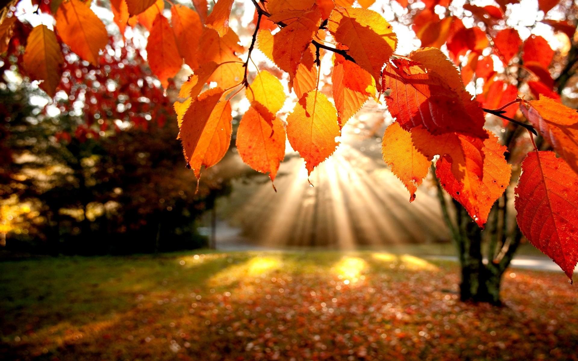 Fall Foliage Desktop Wallpaper - WallpaperSafari