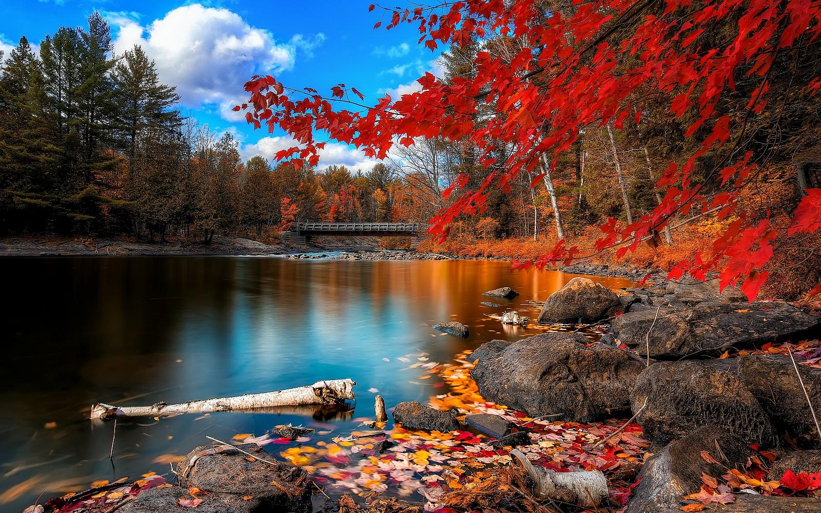 Fall Foliage Desktop Wallpapers | PixelsTalk Net