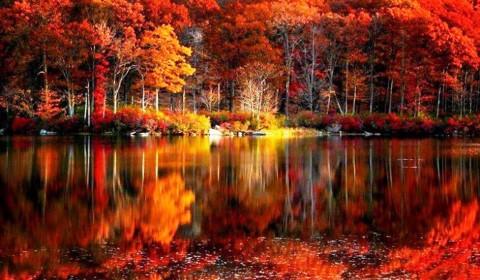 Fall Foliage Desktop Wallpapers - WallpaperPulse