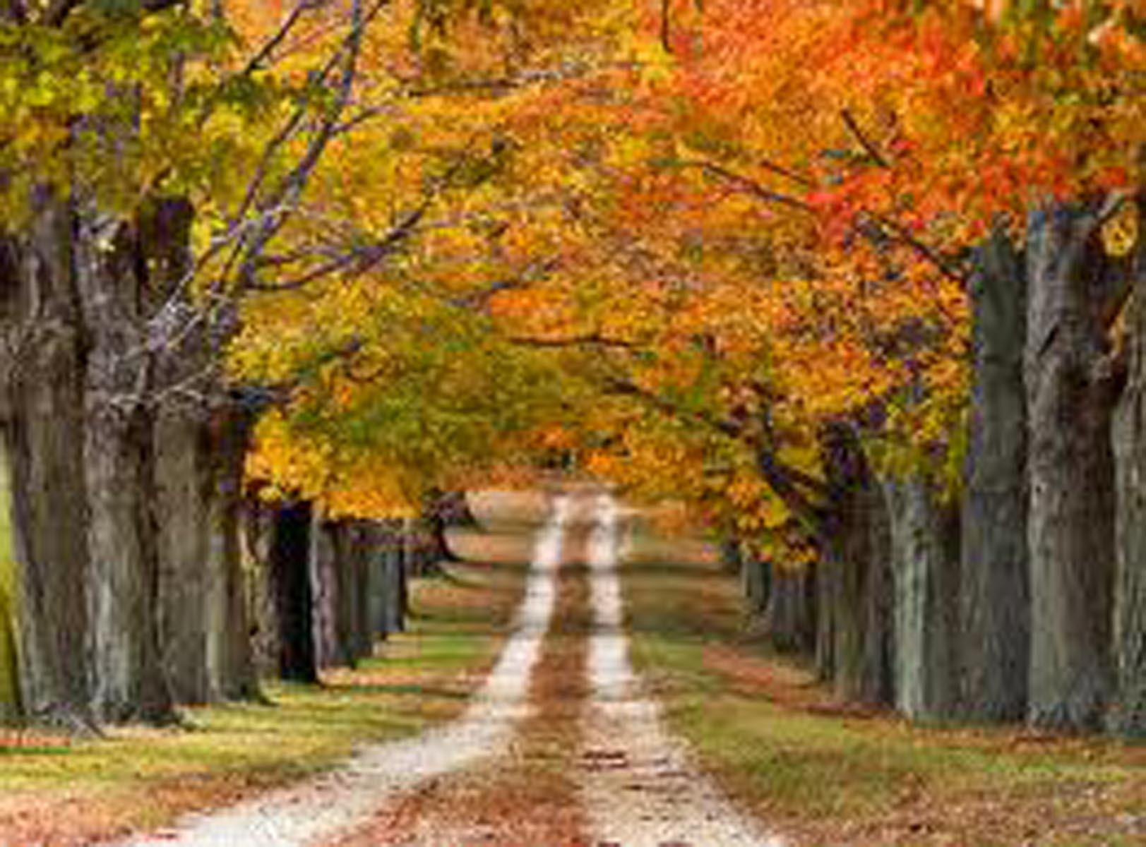 Fall Foliage Wallpaper Page 1
