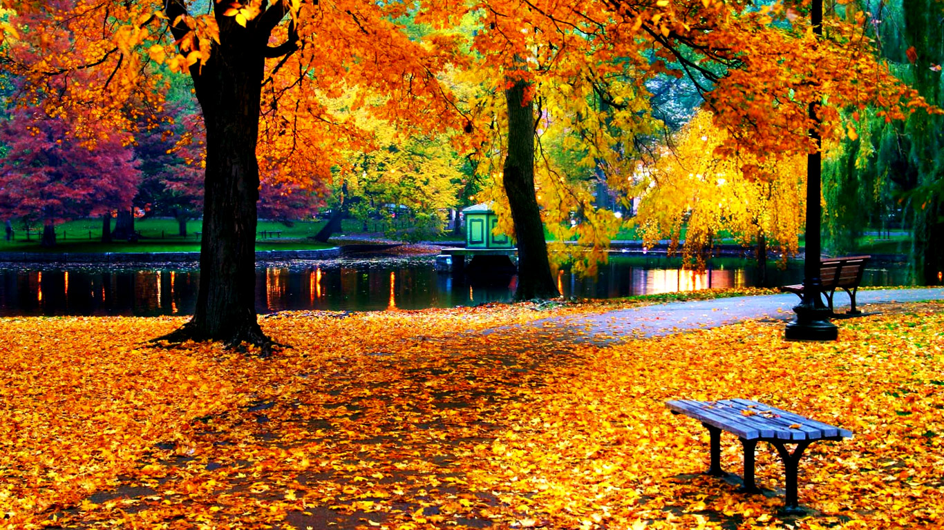 fall foliage wallpaper for desktop - sf wallpaper