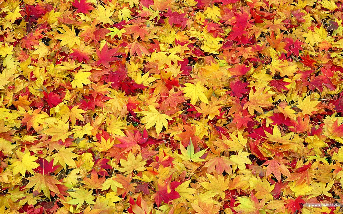 Collection of Fall Foliage Desktop Wallpaper on HDWallpapers