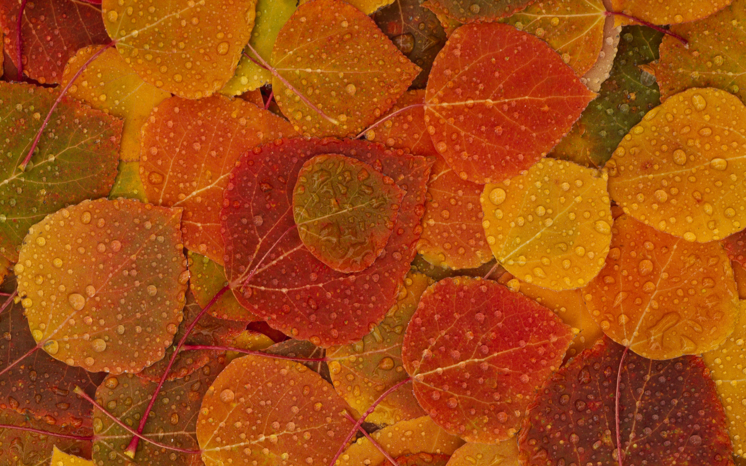Fall Foliage Wallpaper For Desktop - WallpaperSafari