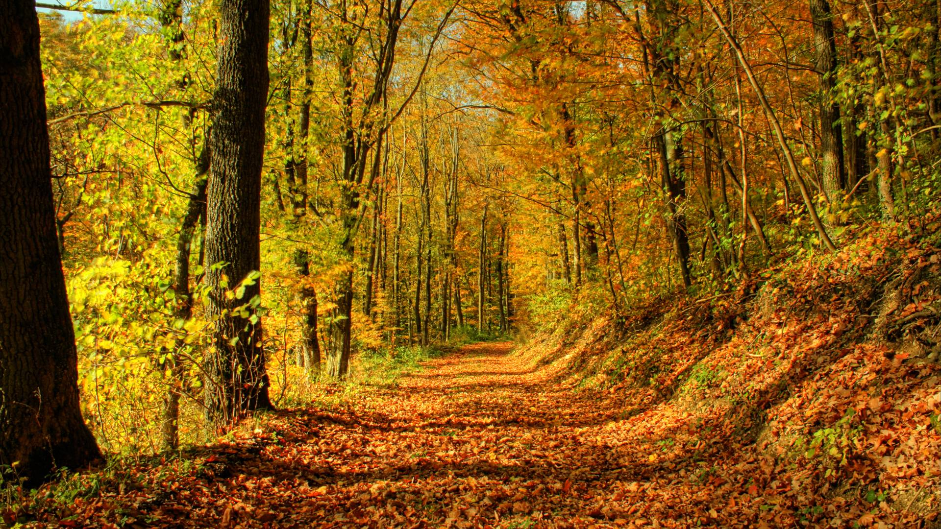 Fall Forest Wallpapers - Wallpaper Cave