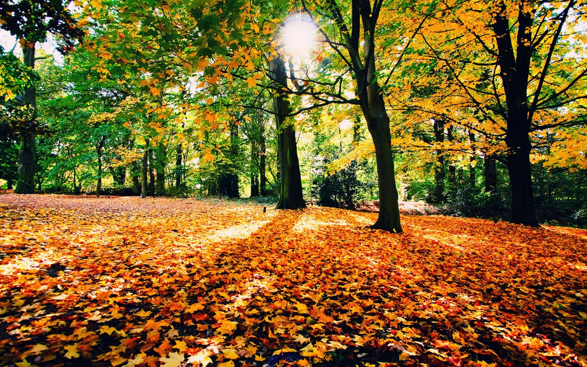 fall forest background sf wallpaper