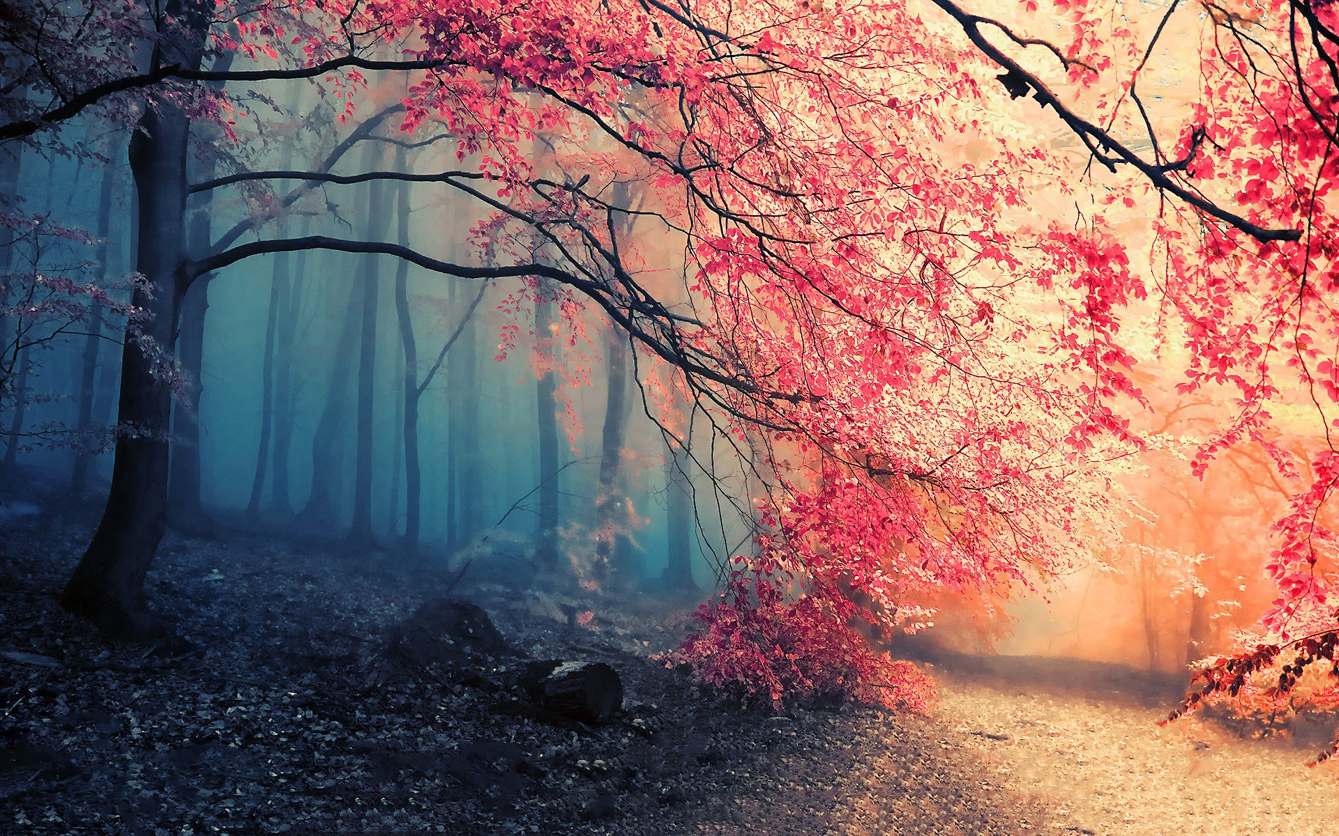 1668 Forest HD Wallpapers   Backgrounds - Wallpaper Abyss