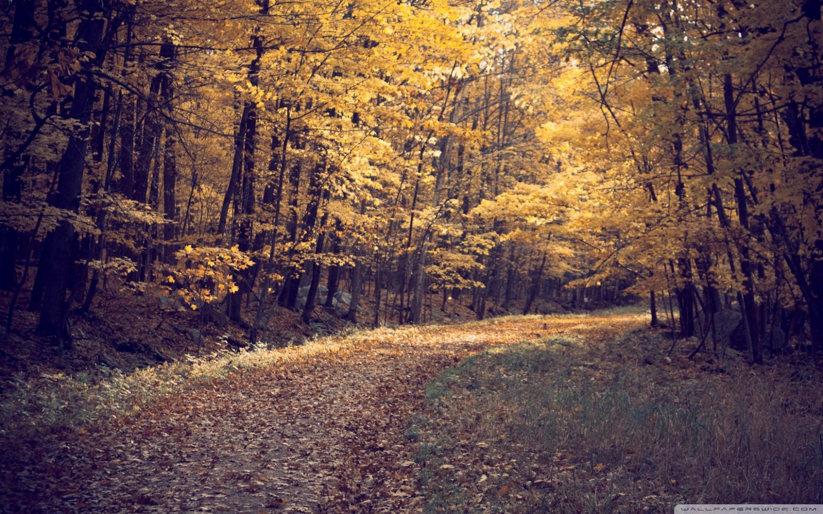 Forest Autumn HD desktop wallpaper : Widescreen : High Definition