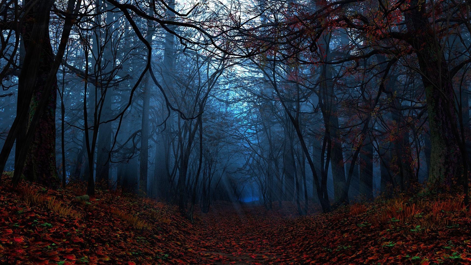 Autumn Forest Wallpaper for Desktop | PixelsTalk Net