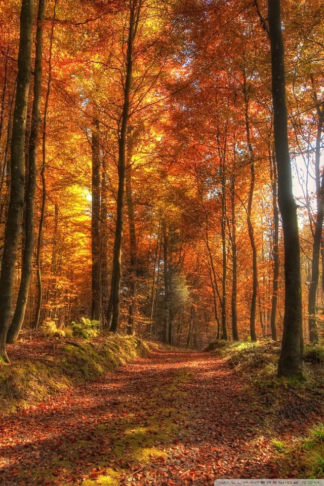 Fall Forest Path HD desktop wallpaper : High Definition
