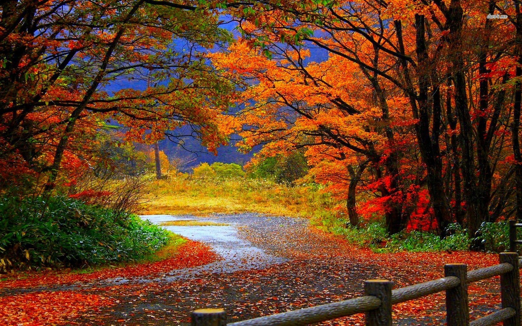 Autumn Forest Road HD Wallpaper #4561 Wallpaper Themes