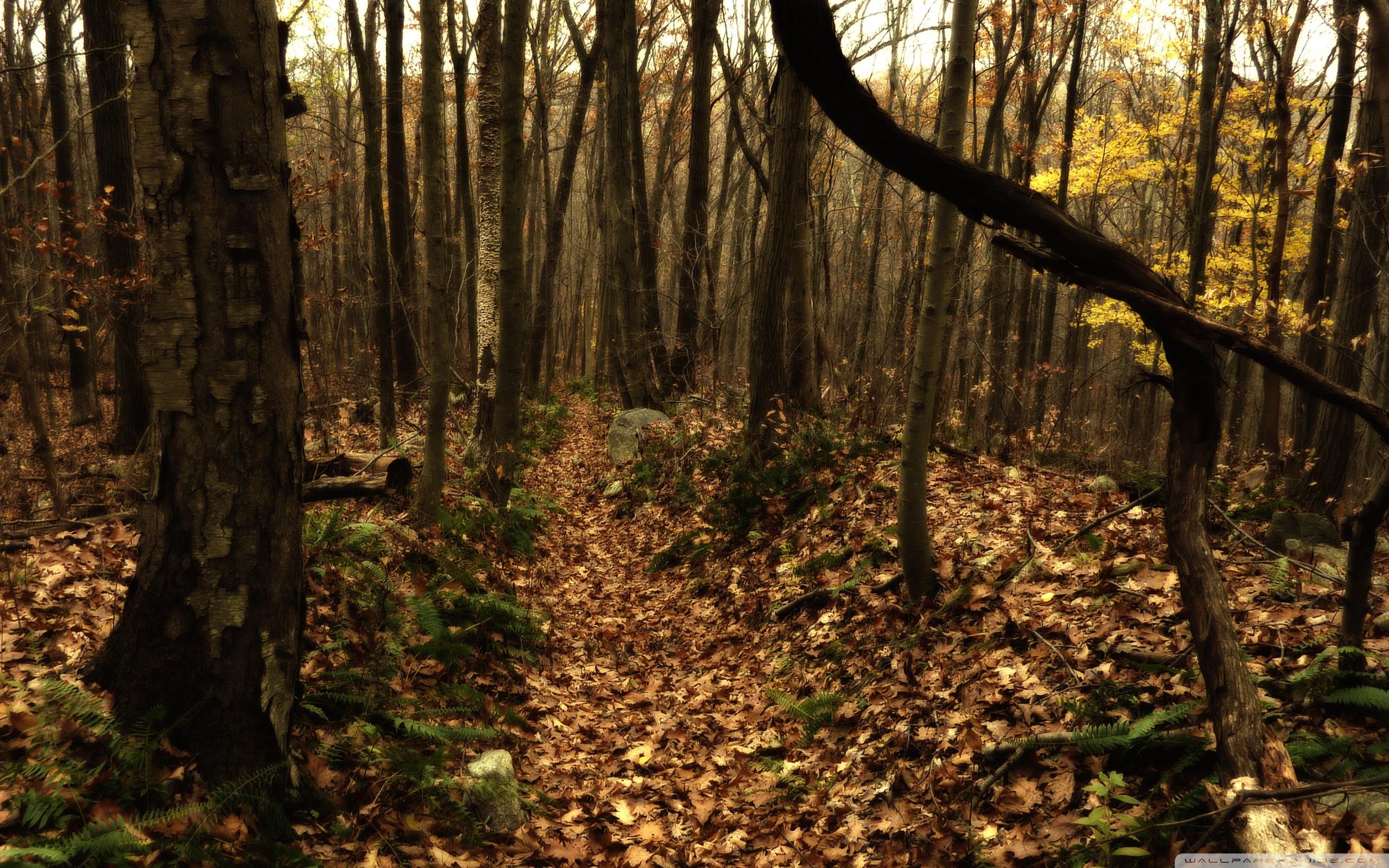 Fall Forest HD desktop wallpaper : High Definition : Fullscreen