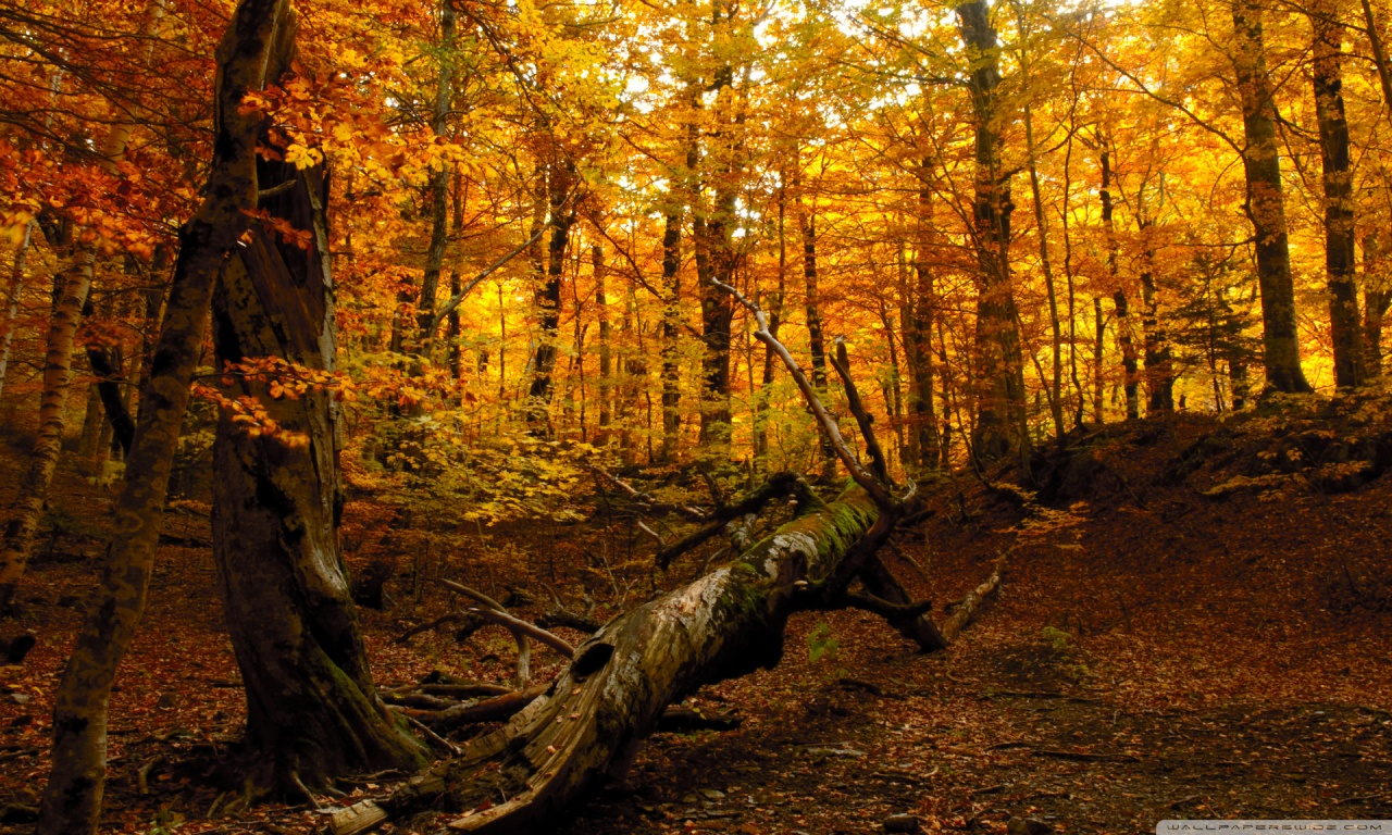 Autumn Forest HD Desktop Wallpaper High Definition Fullscreen