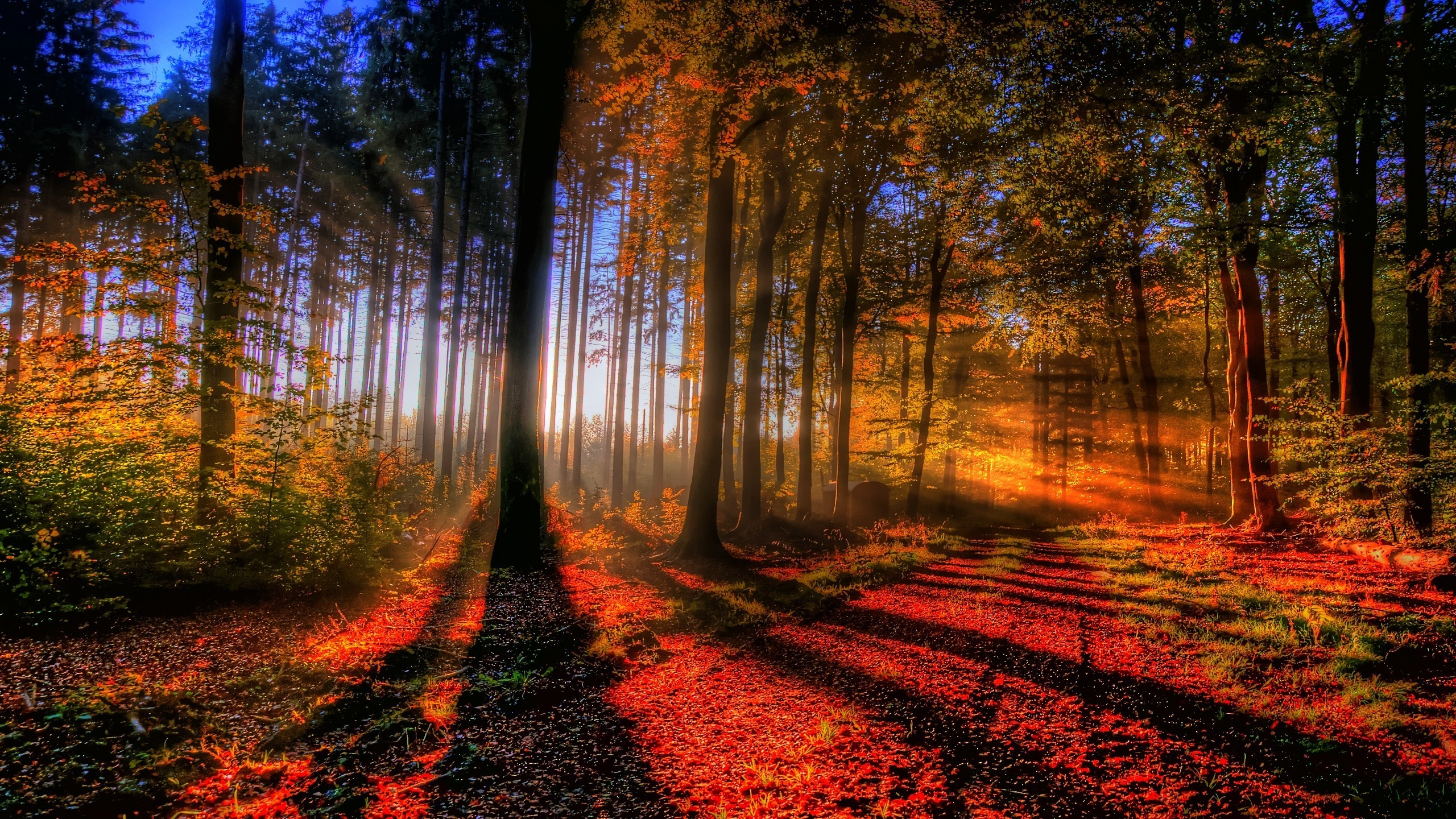 fall forest wallpaper - sf wallpaper