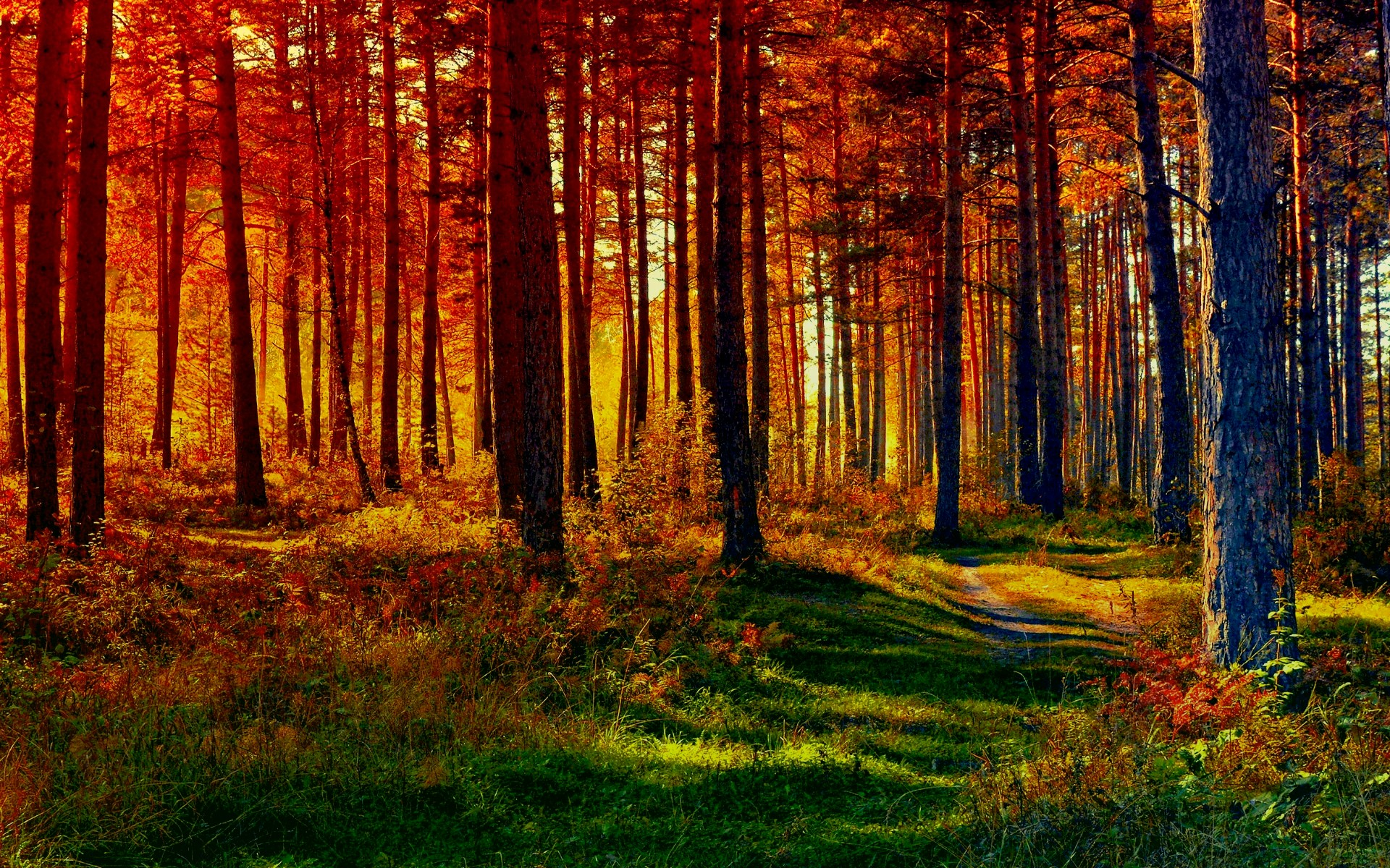 HD Fall Forest Path HD Wallpapers - HDWallpaperSets Com