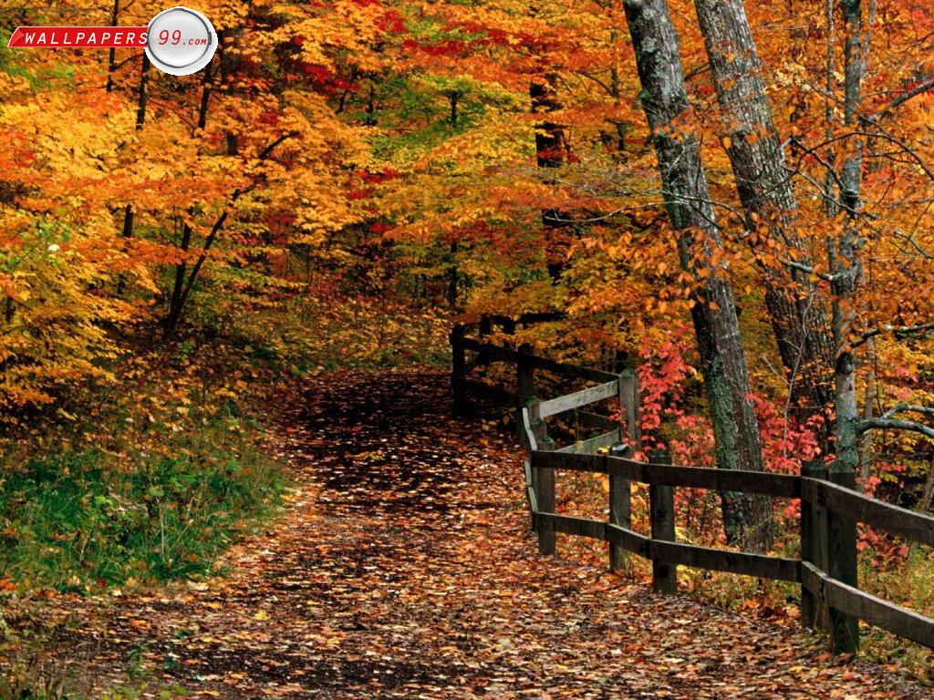 Fall Desktop Wallpapers Free - Wallpaper Cave