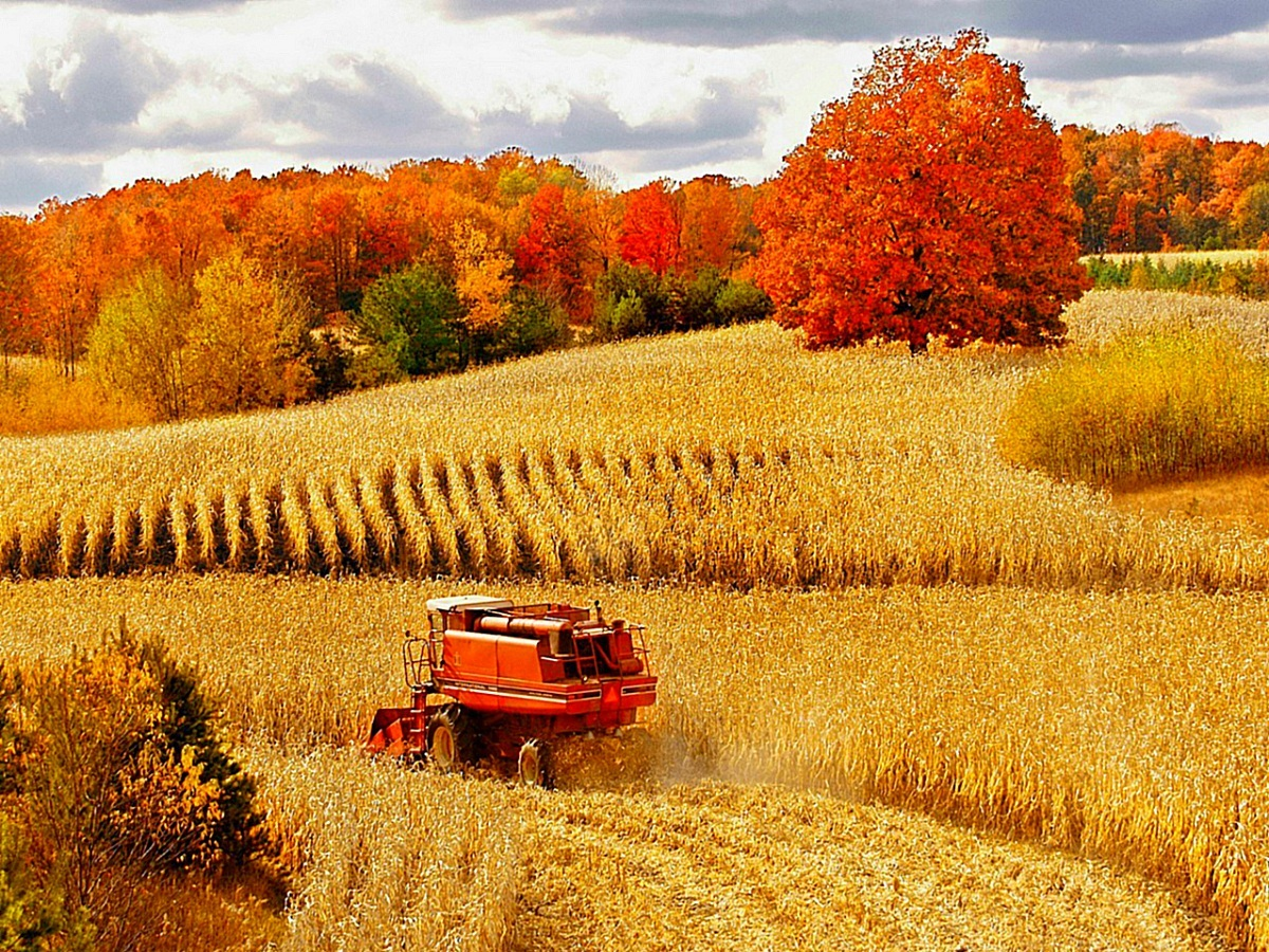 Fall Harvest Wallpaper Designs 3806 - Amazing Wallpaperz