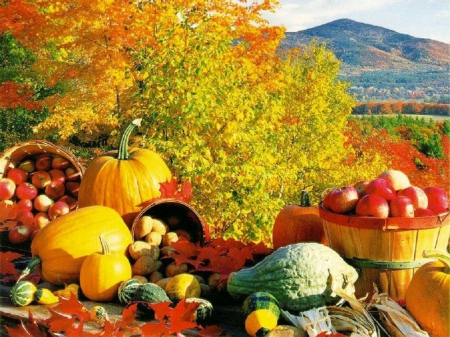 Fall Harvest - Other & Nature Background Wallpapers on Desktop