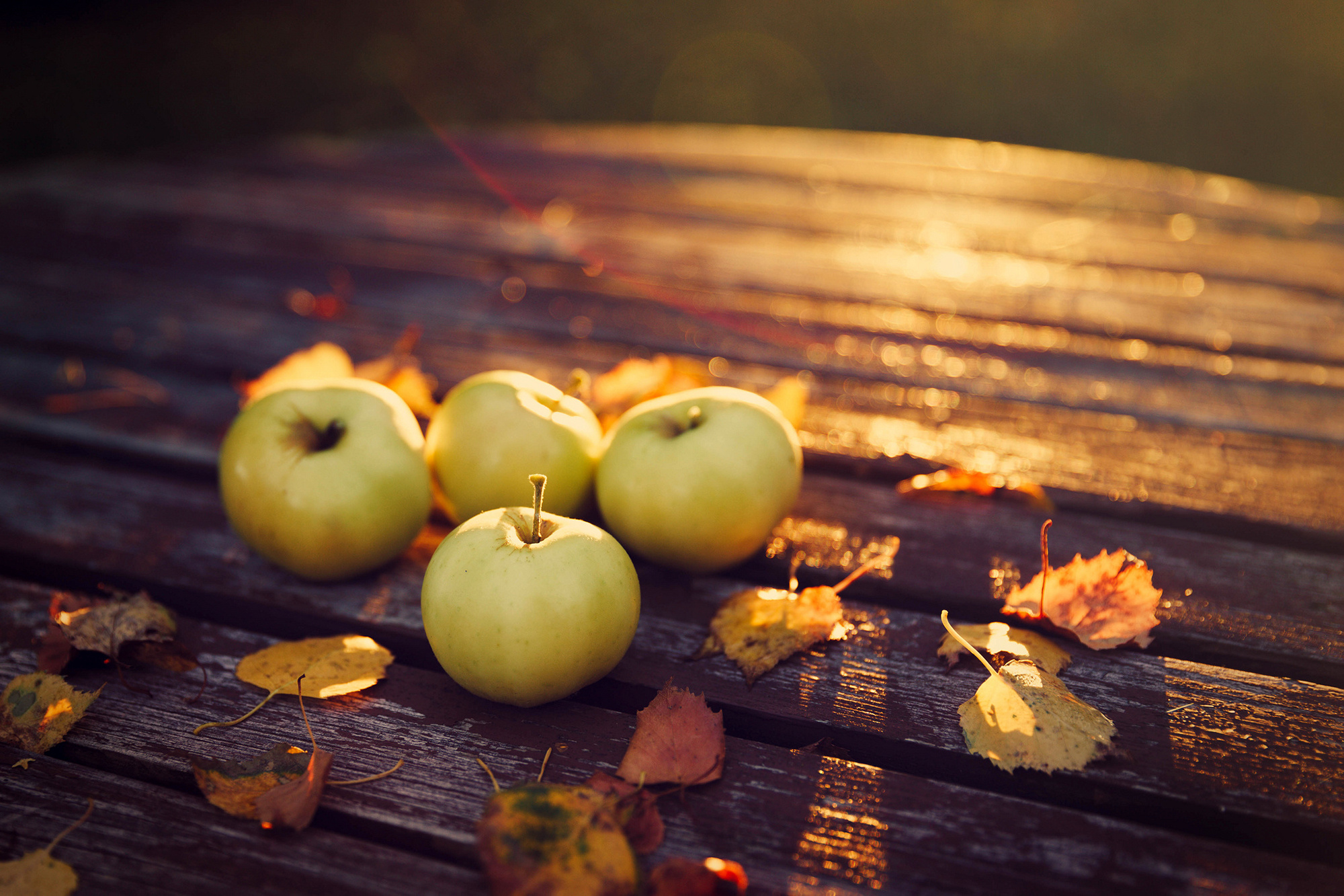 Fall Harvest Wallpaper Downloads 3863 - Amazing Wallpaperz