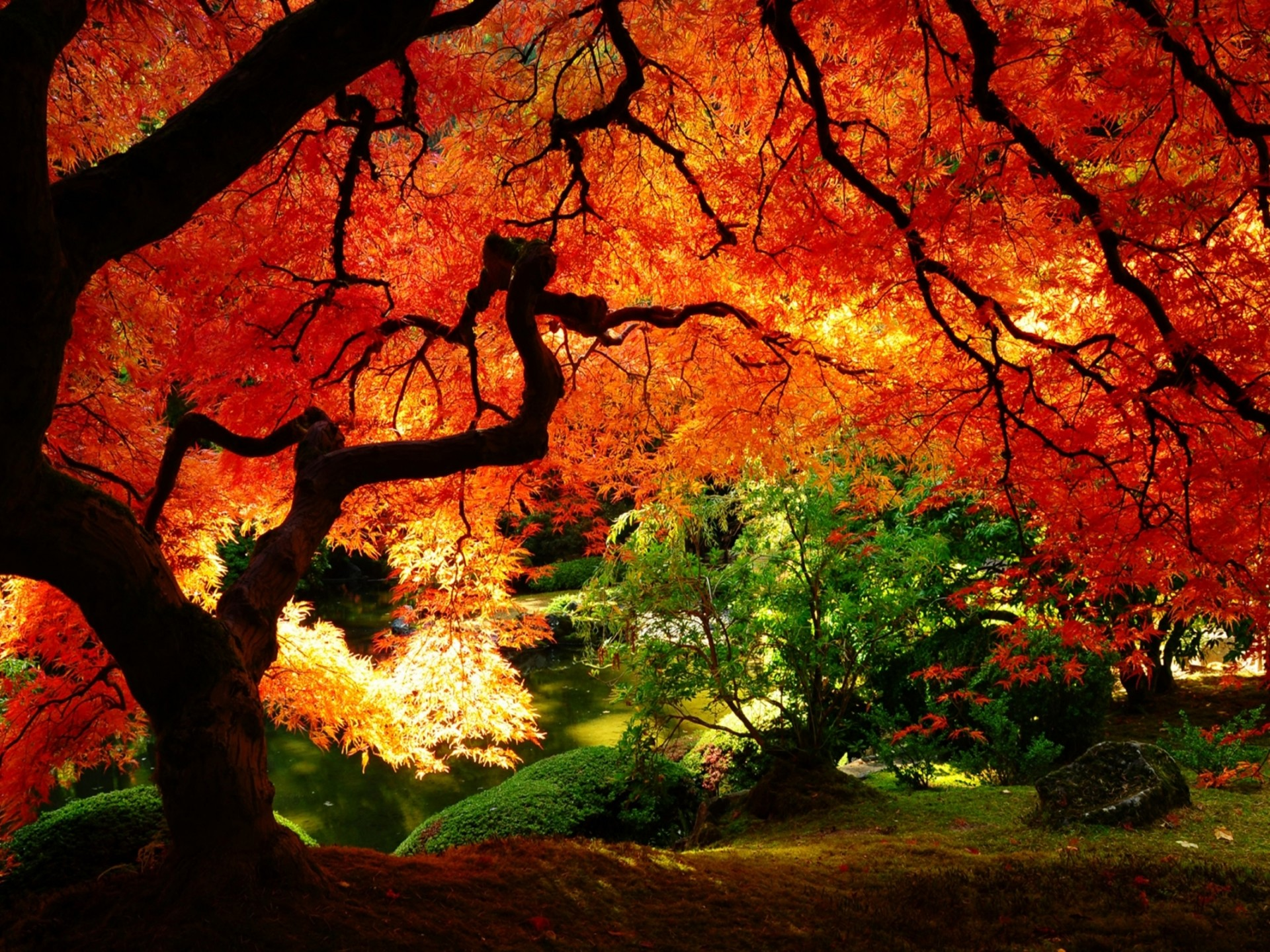 Hd Wallpapers Nature Fall Hd Images 3 Hd Wallpapers : Wallpapers13 com