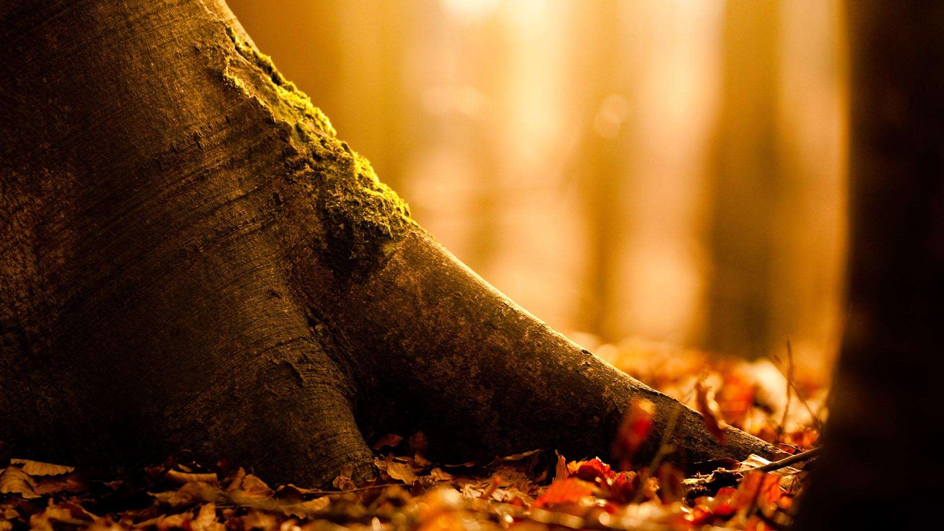 Collection of Fall Hd Wallpapers on HDWallpapers