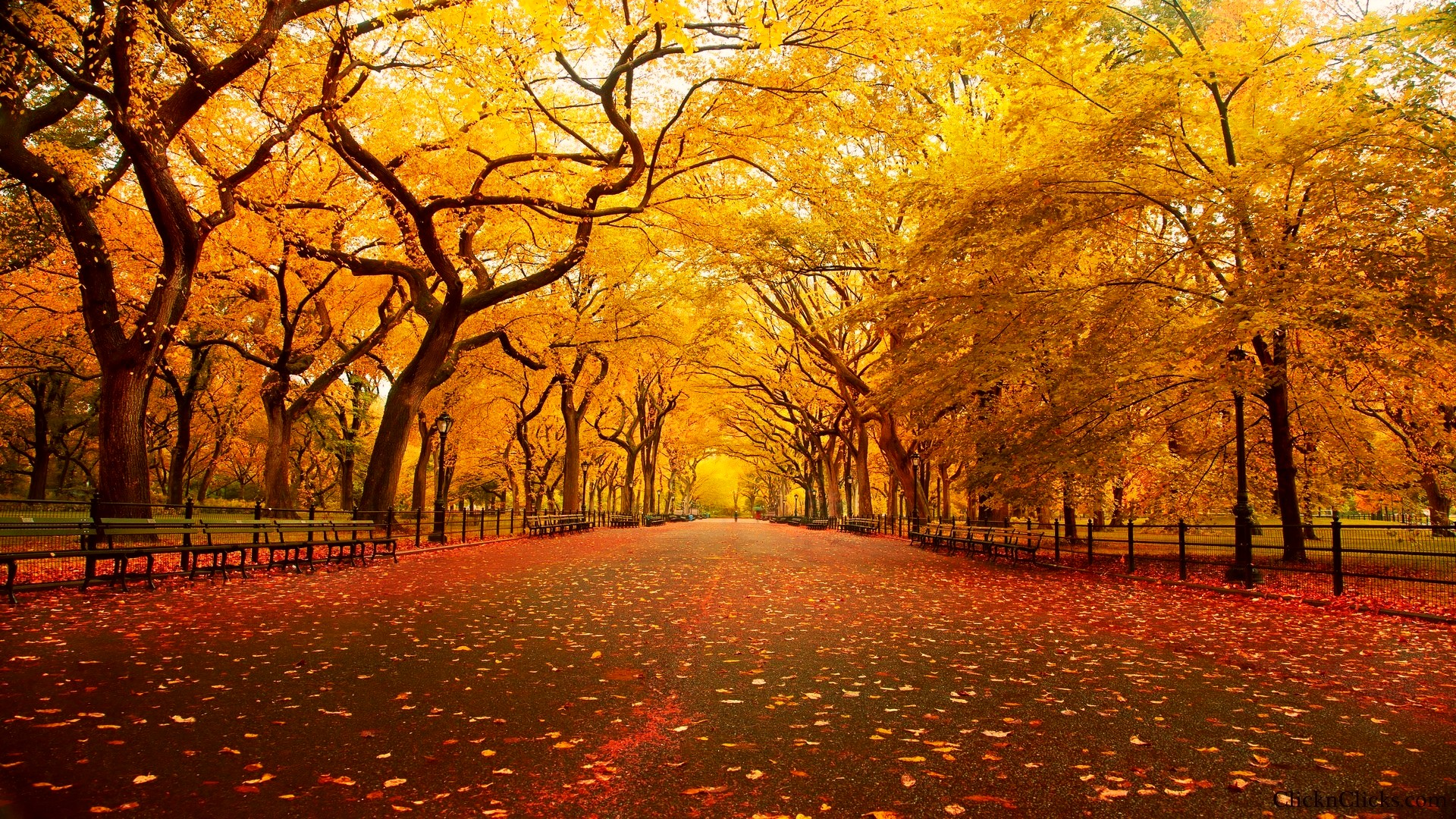 Fall HD Wallpaper #7000267