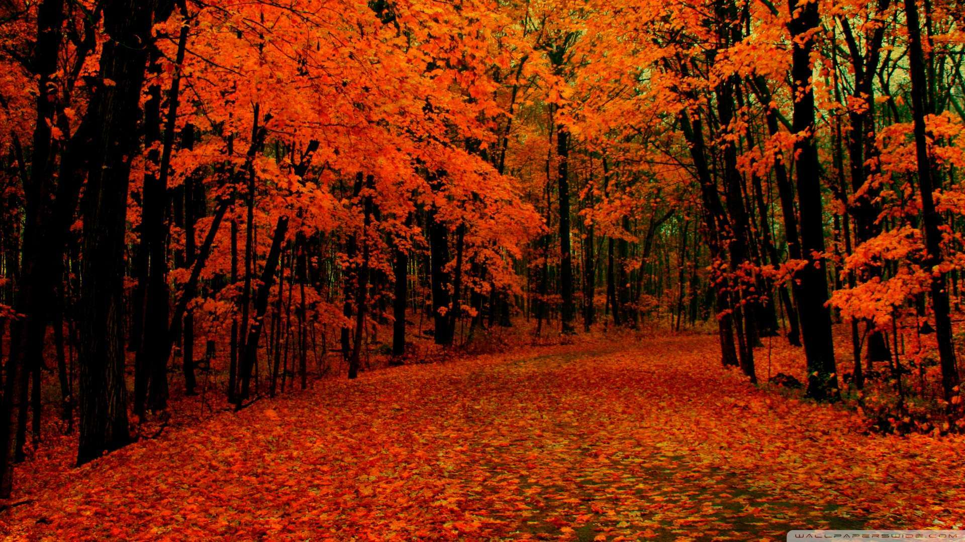 Fall Hd Wallpaper