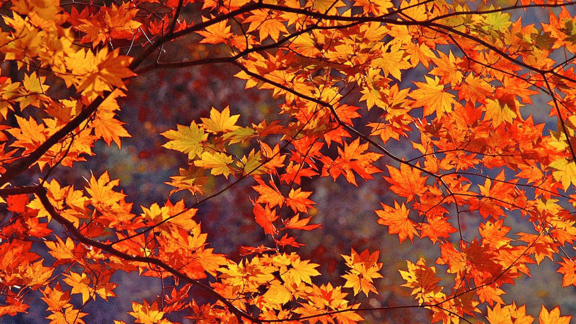 Fall Leaves Backgrounds - WallpaperSafari