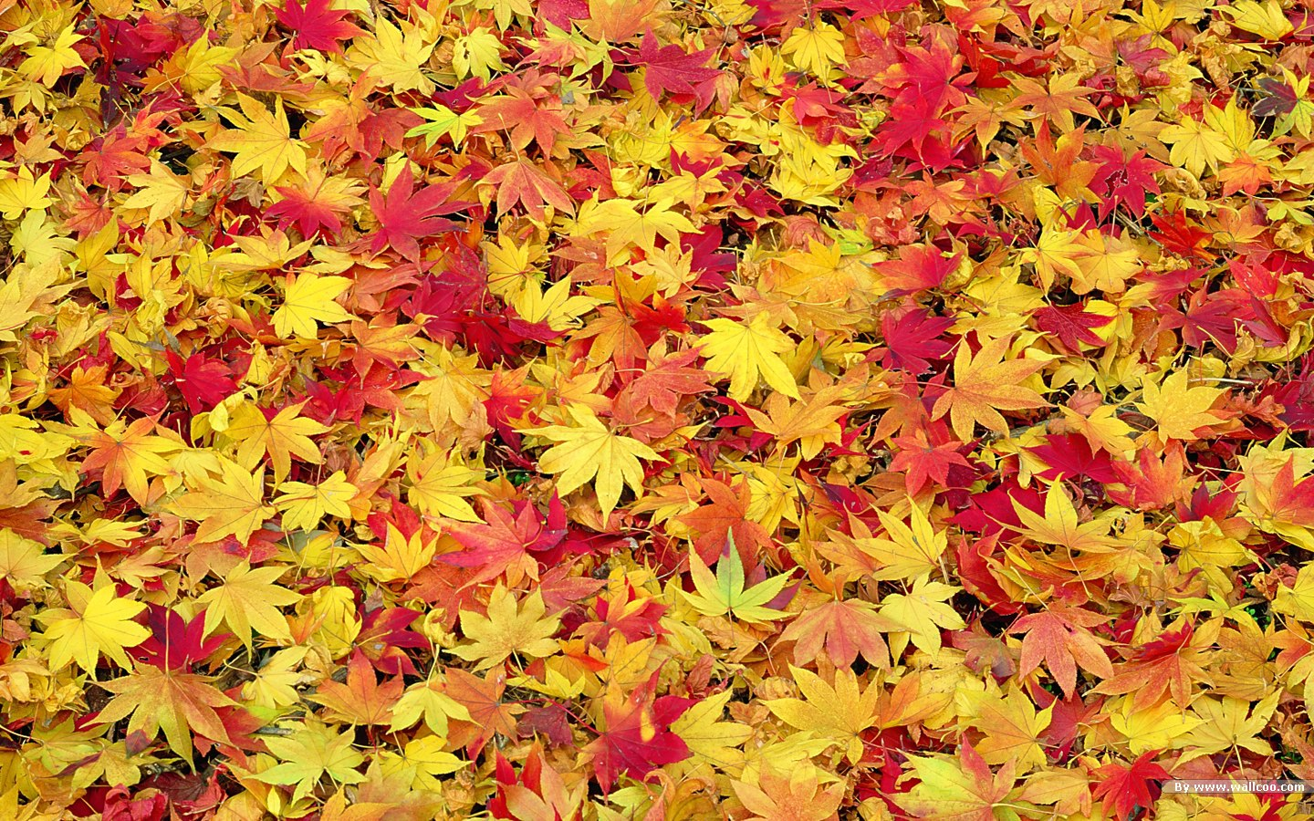 78 Best images about fall leaves on Pinterest | Fall leaves