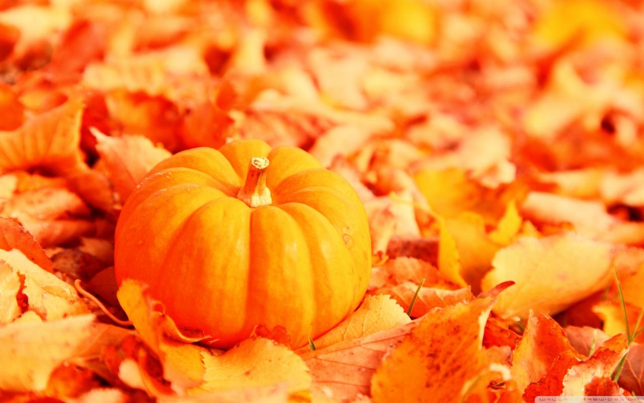 Pumpkin And Autumn Leaves HD desktop wallpaper : High Definition