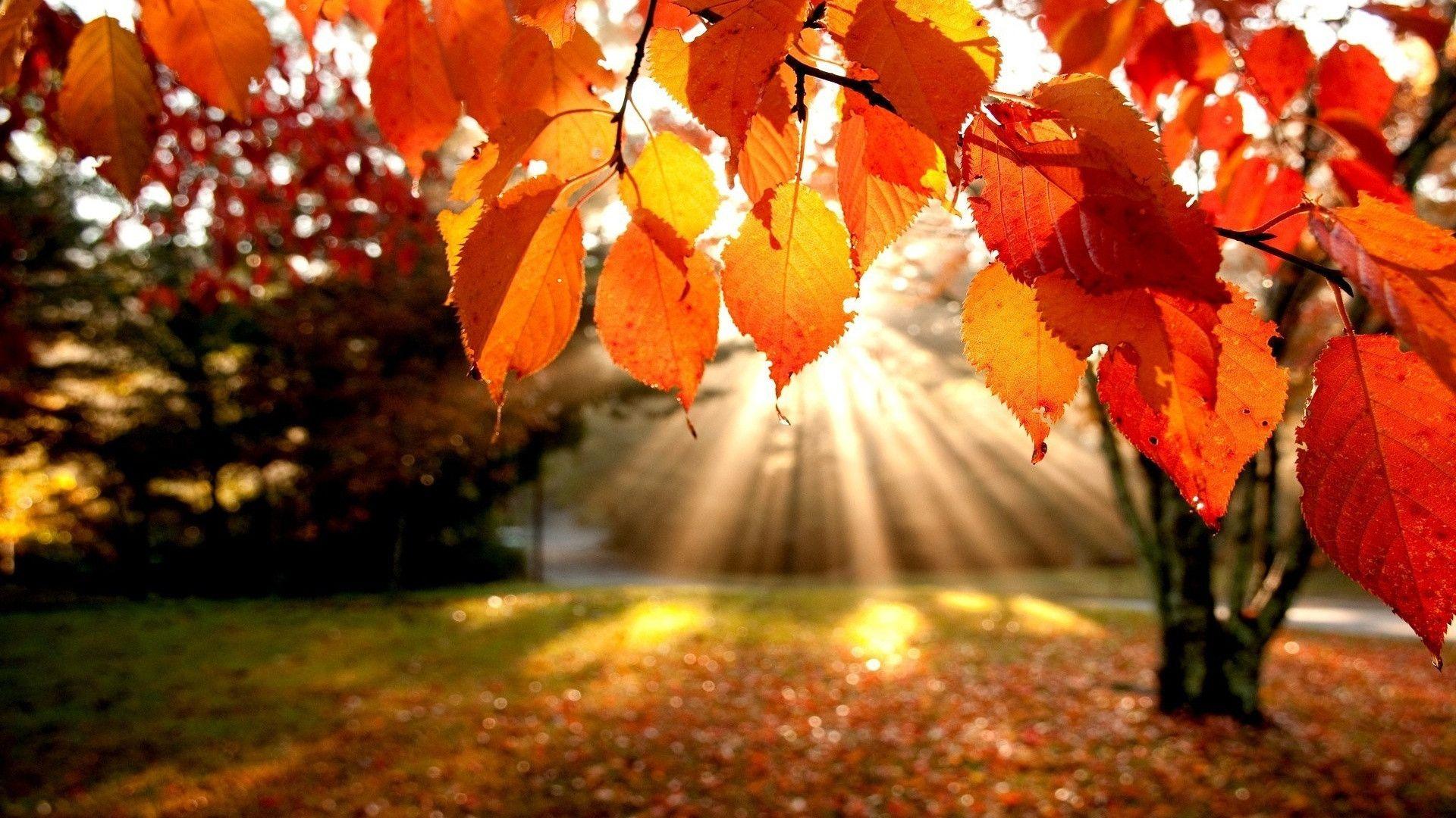 Autumn Leaves Wallpaper - Bhstorm com