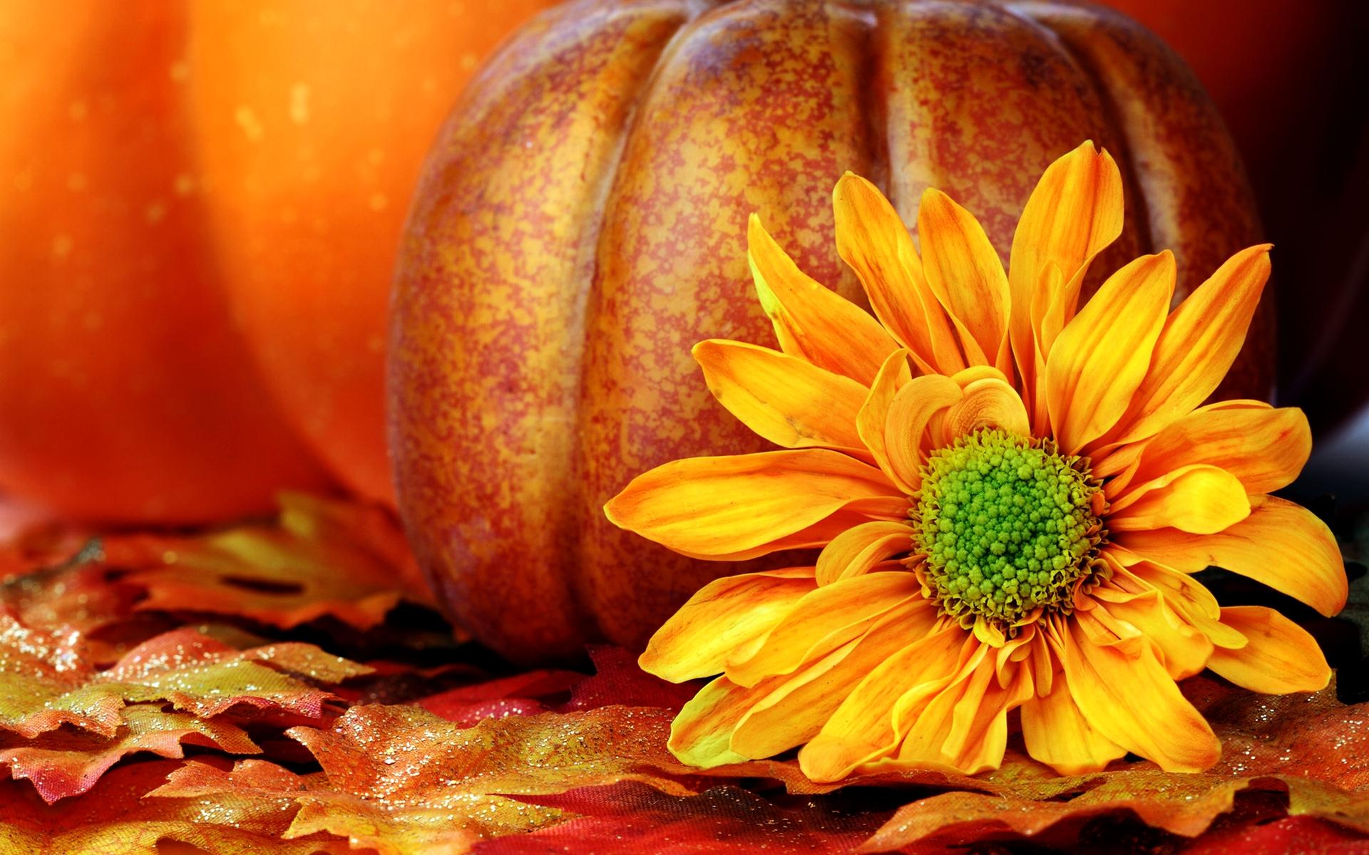 Free Fall Wallpapers with Pumpkins - WallpaperSafari