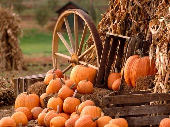 Cute Fall Pumpkins Wallpaper | Free Fall Pumpkin Desktop | Fall