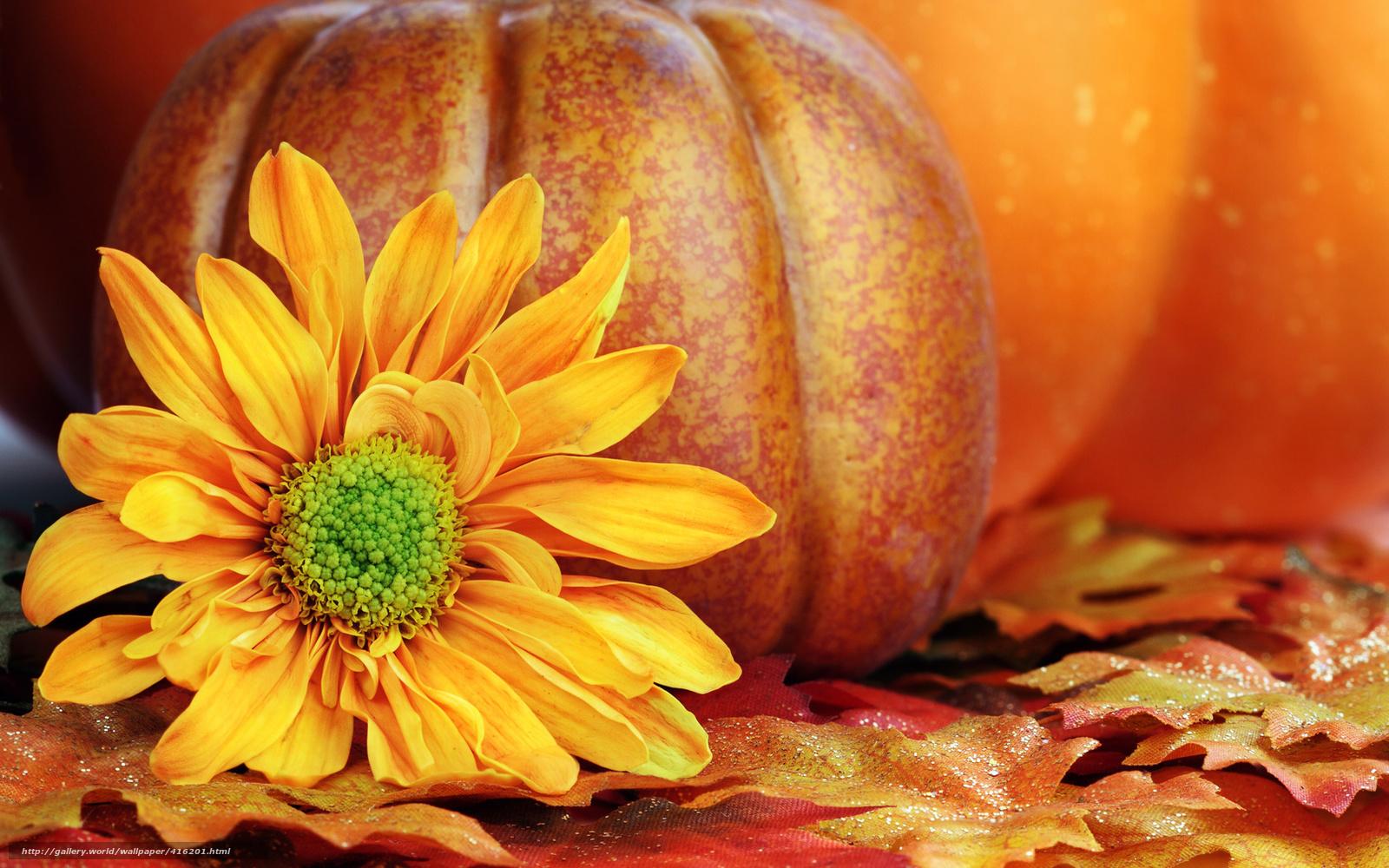 Fall Pumpkin Wallpaper and Screensavers - WallpaperSafari