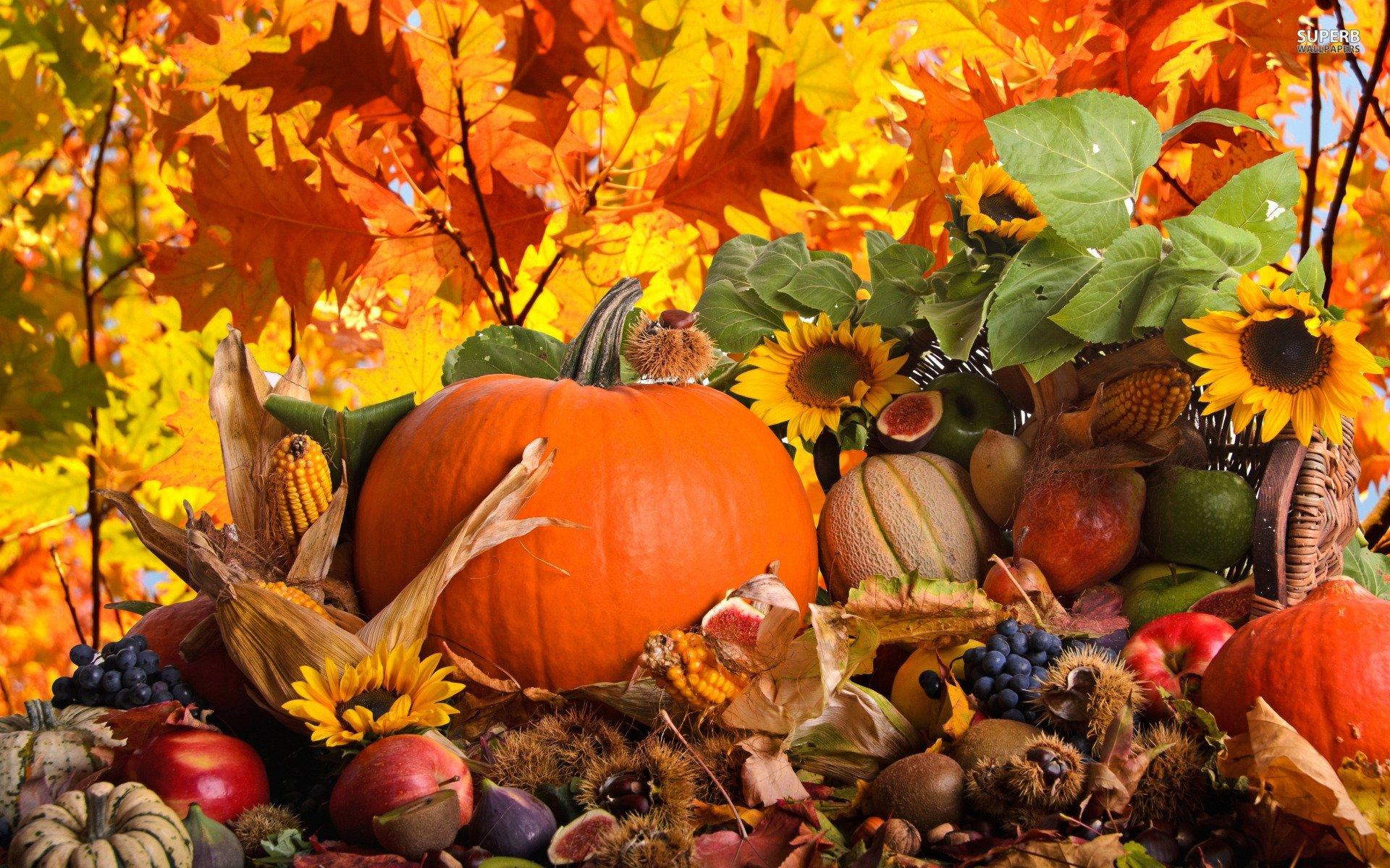 Free Desktop Pumpkin Wallpapers | PixelsTalk Net