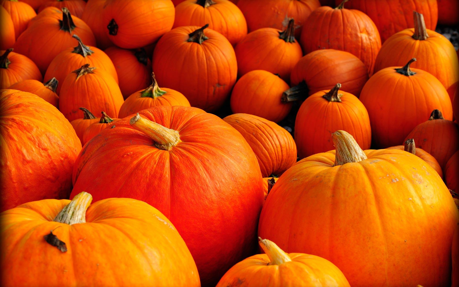 Free HD Pumpkin Wallpapers | PixelsTalk Net
