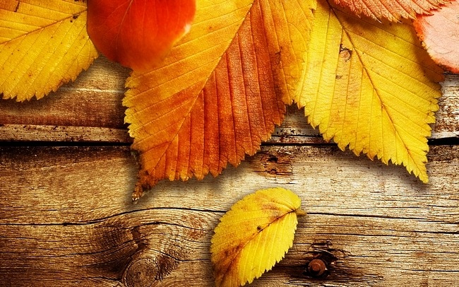Desktop Fun: Autumn Leaves Wallpaper Collection [Bonus Size]