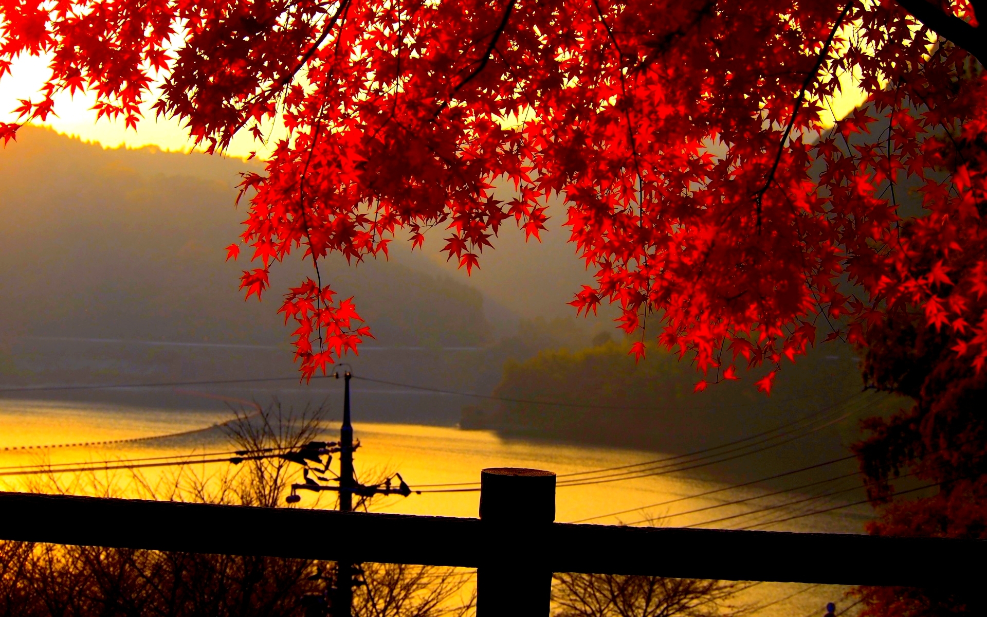 Red Autumn Leaves P Ography Hd Wallpapers For Beckground | Fall