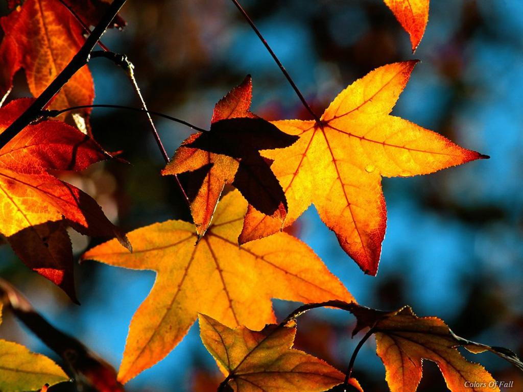 Fall Leaves Wallpapers - Wallpaper Cave
