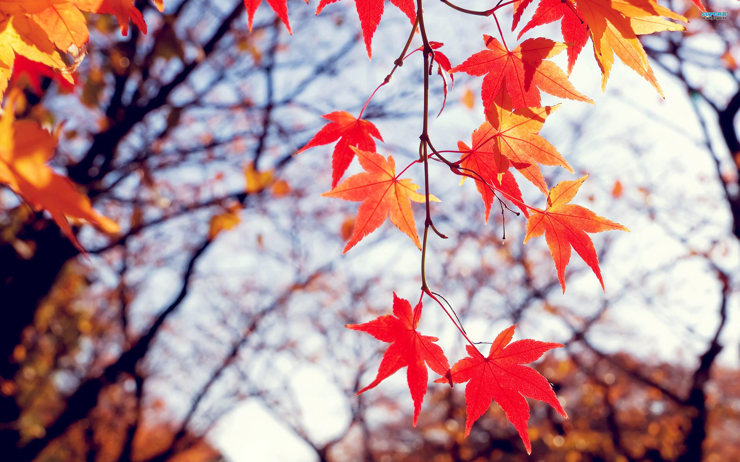 17 Best ideas about Fall Leaves Wallpaper on Pinterest | Desktop