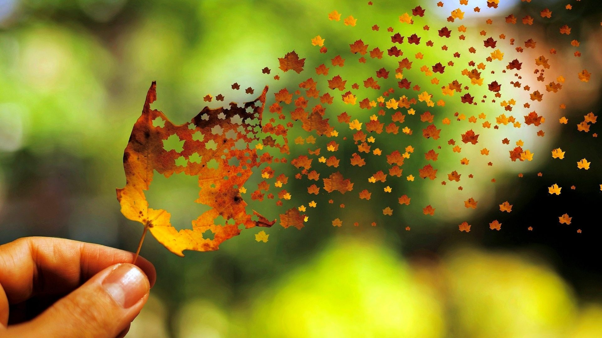 Autumn Leaf Art Of Fall Leaves Wallpaper Of Beautiful Nature
