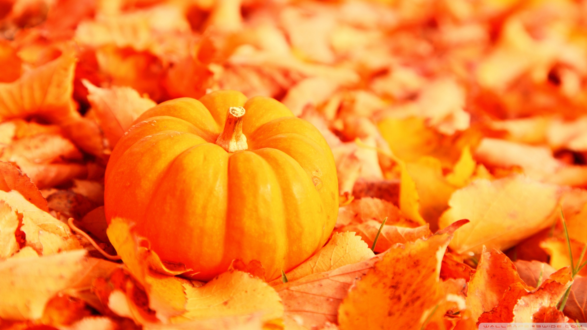 Pumpkin And Autumn Leaves HD desktop wallpaper : High Definition