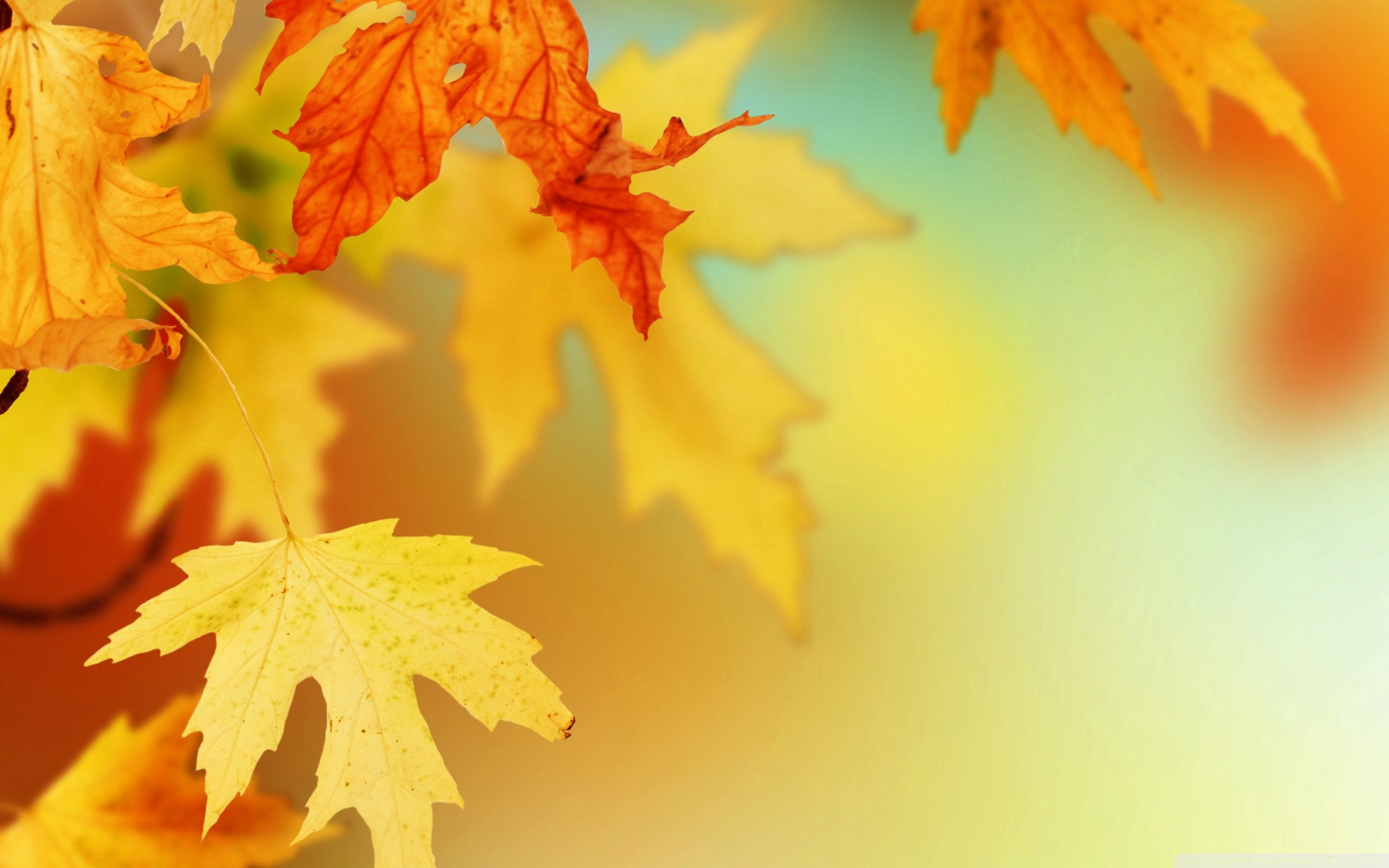 Fall Leaves Wallpapers Free - Wallpaper Cave